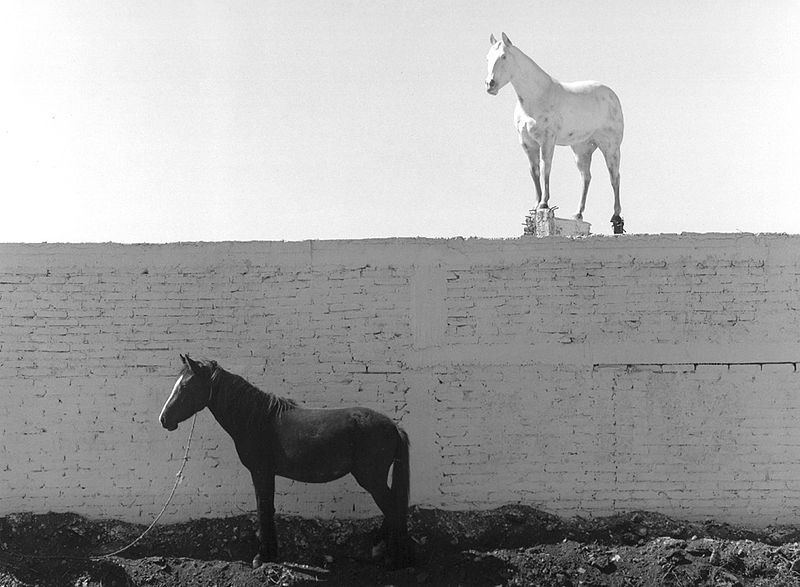 ©Флор Гардуньо. «У деда была лошадь, Мексика, 1987»