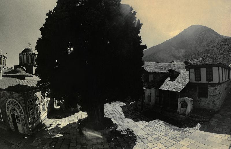 ©Александр Китаев. «Тысячелетний кипарис. 1997»