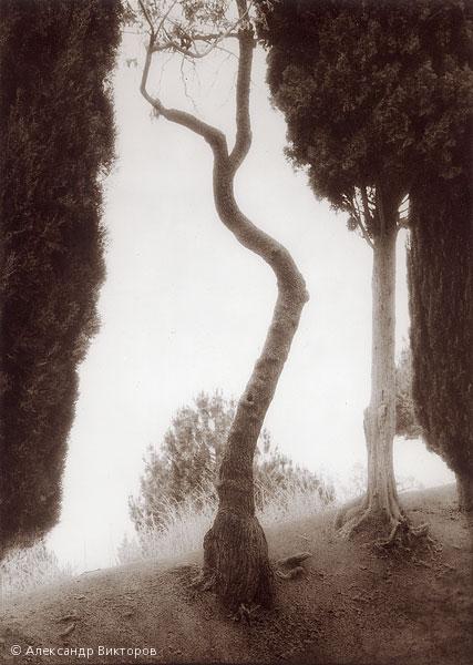 ©Александр Викторов. «Кривое дерево»