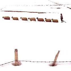 Война – одна из главных тем современной фотографии. Босниец Зия Гафич – «специалист по съемкам событий, которые уже закончились», видит следы конфликтов в самом идиллическом пейзаже.