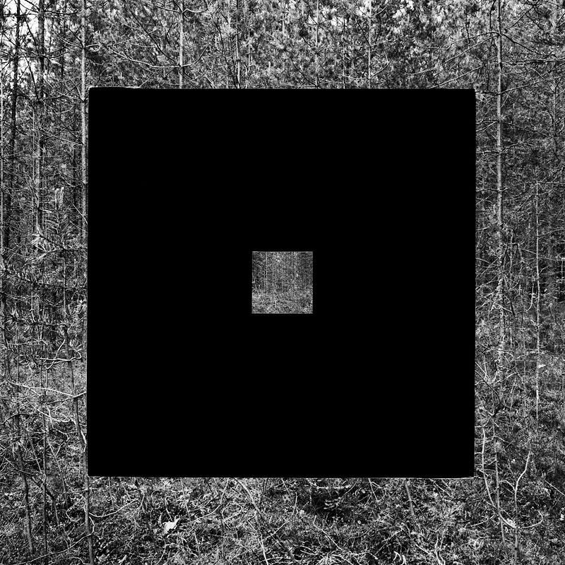 ©Николай Кулебякин. «Молодой лес»