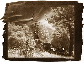 © Дмитрий Орлов. Несуществующие пейзажи (лес Julian, South California), 2002