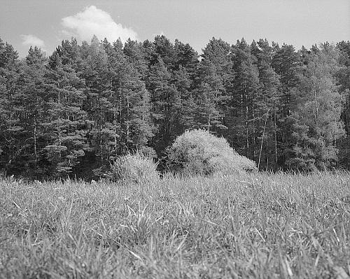 ©Николай Кулебякин. «2002»