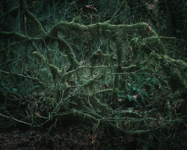 """«Создания из мха» из серии «Звук ветра» (""""The Sound of Wind"""") Дженни Райфл. Одна персональная экспозиция в некоммерческом пространстве привела к целой серии выставок: расходы по оформлению фотограф оплатила из полученного в это время гранта."""