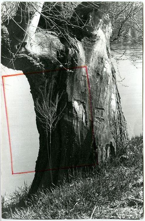 ©Дашевский Михаил Аронович. «Кора с веткой. 1980-e (контрольный отпечаток)»