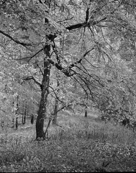 Николай Карташов. tree. ...