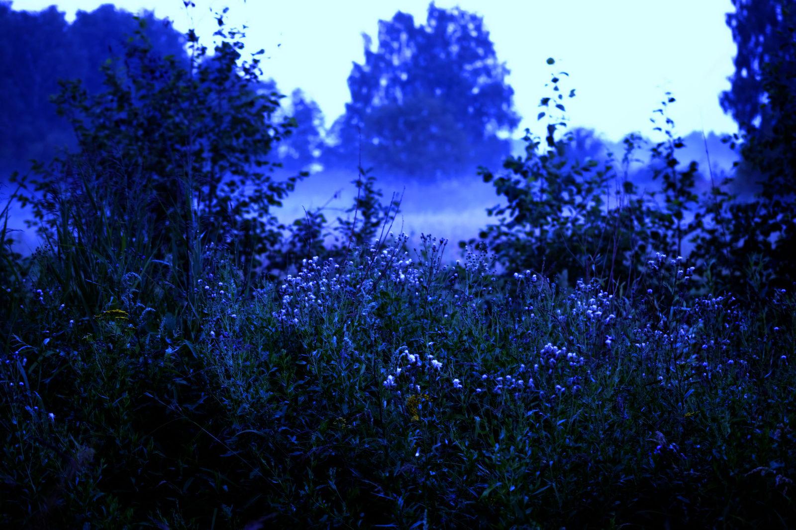 Marina Khramova. Night. Untittled