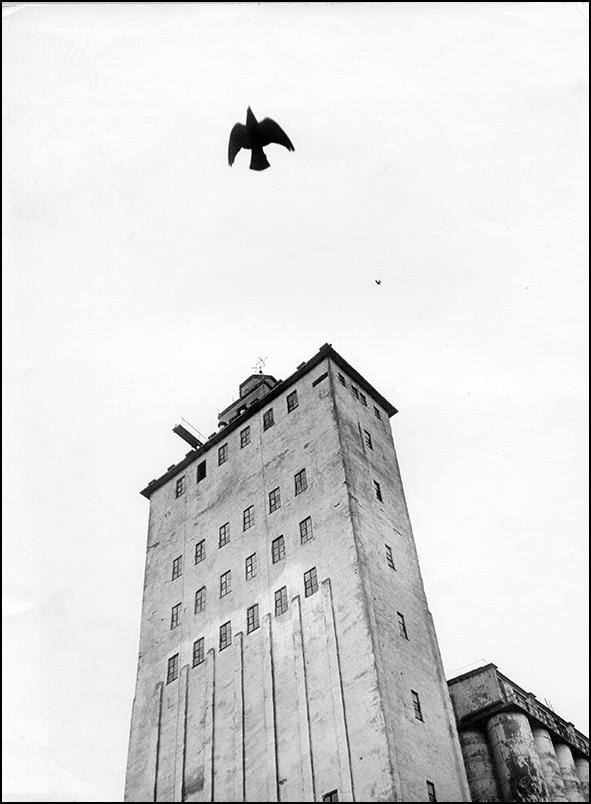 Артем Чернов. Артем Чернов. Комбикормовый завод, Подмосковье, 1990