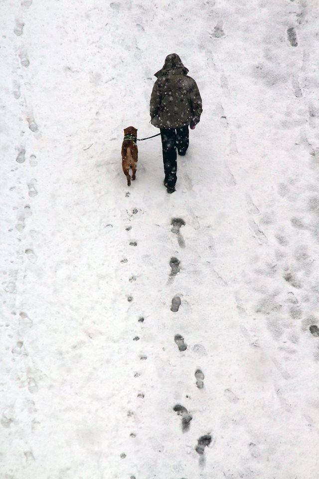 Konstantin Stepuro. Our Yard Dogs.. Untittled