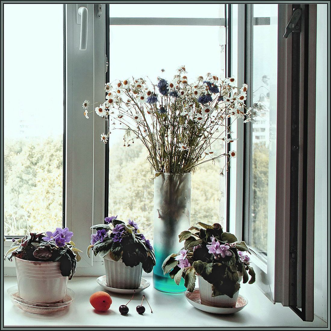 Елена Тарзиманова. Окно