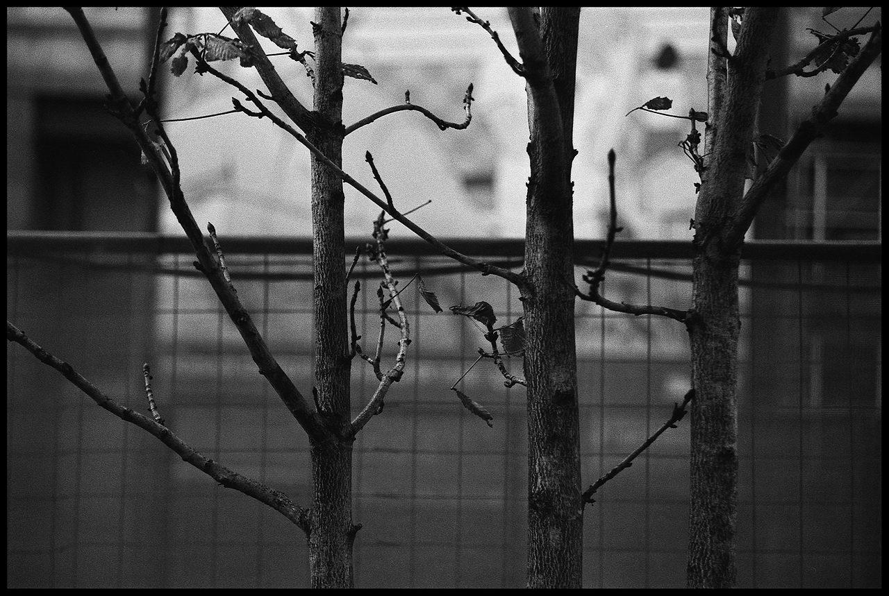 alpauk. Deep Park. oct05-03