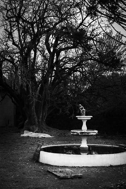 Екатерина Буракова-Шчекич. Аргентина. старый сад